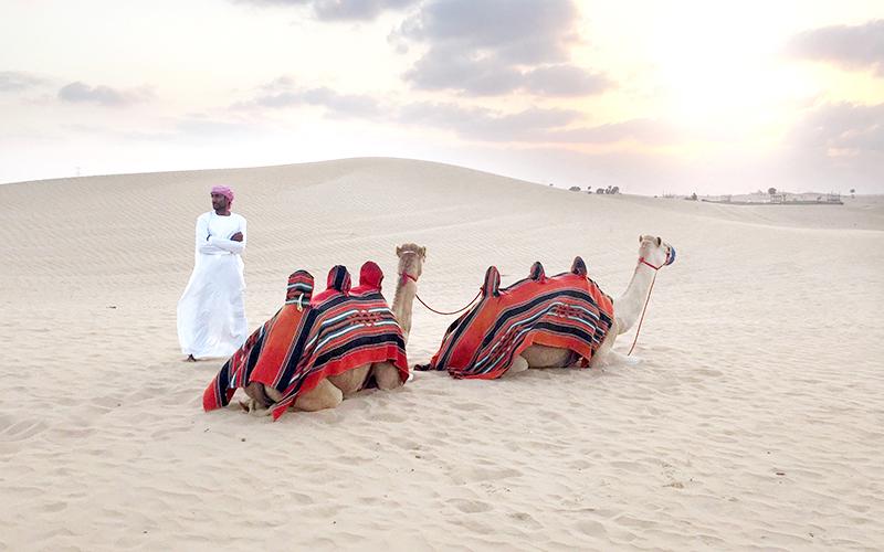 Desert Safari – Dubai, The Ultimate travel Guide